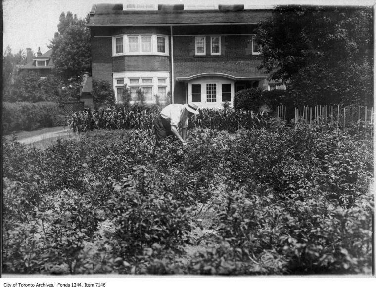Victory Garden on front lawn, Crescent Road. [c1916]. William James Family Fonds, City of Toronto Archives, F1244.